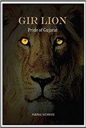 Gir Lion Pride of Gujarat